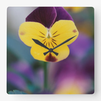 USA, Utah, Close-Up of Viola tricolor in garden Wall Clock
