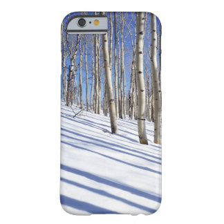 USA, Utah, Dixie National Forest, Aspen Grove Barely There iPhone 6 Case
