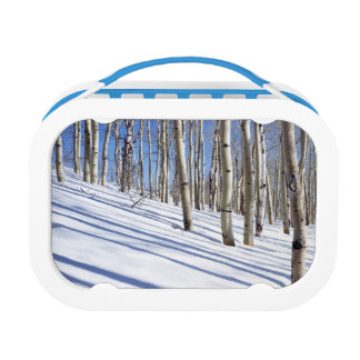 USA, Utah, Dixie National Forest, Aspen Grove Lunchboxes