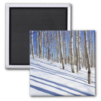 USA, Utah, Dixie National Forest, Aspen Grove Square Magnet