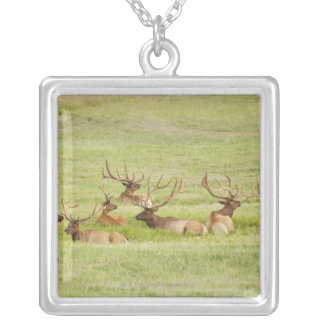 USA, Utah, Group of bull Elk (Cervus canadensis) Silver Plated Necklace