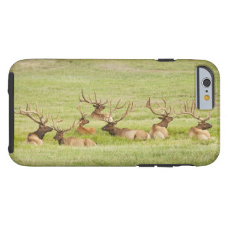USA, Utah, Group of bull Elk (Cervus canadensis) Tough iPhone 6 Case