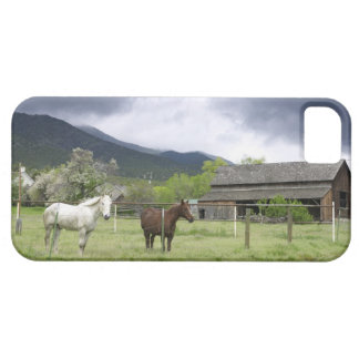 USA, Utah, Horses on ranch Barely There iPhone 5 Case