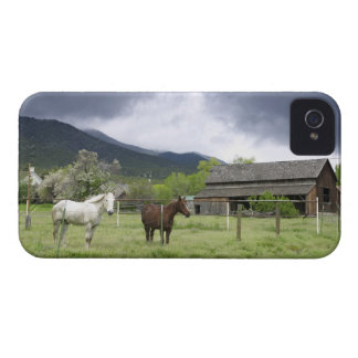 USA, Utah, Horses on ranch Case-Mate iPhone 4 Case