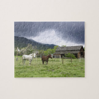 USA, Utah, Horses on ranch Jigsaw Puzzle