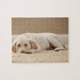 USA, Utah, Lehi, Portrait of Yellow Labrador Puzzles