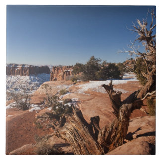 USA, Utah, Moab. Canyonlands National Park, Large Square Tile