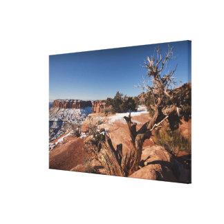 USA, Utah, Moab. Canyonlands National Park, Stretched Canvas Print