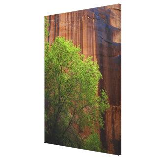 USA, Utah, Paria Canyon- Vermillion Cliffs Stretched Canvas Prints
