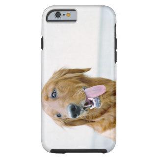 USA, Utah, Salt Lake City, Half shaved Golden Tough iPhone 6 Case
