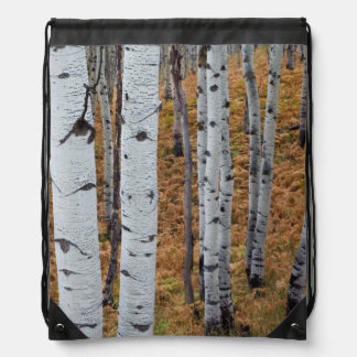 USA, Utah, Uinta-Wasatch-Cache National Forest 2 Backpack