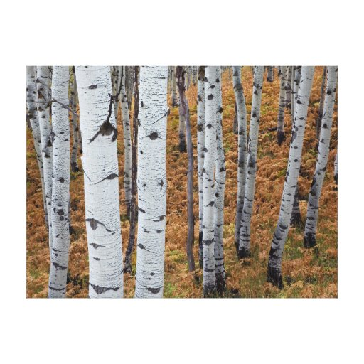 USA, Utah, Uinta-Wasatch-Cache National Forest 2 Stretched Canvas Prints