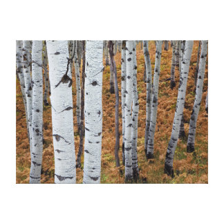 USA, Utah, Uinta-Wasatch-Cache National Forest 2 Canvas Print