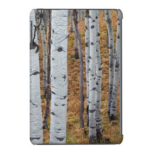 USA, Utah, Uinta-Wasatch-Cache National Forest 2 iPad Mini Case