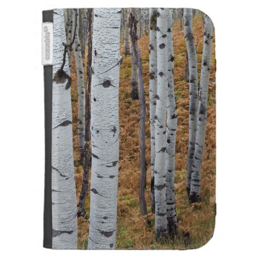 USA, Utah, Uinta-Wasatch-Cache National Forest 2 Case For Kindle