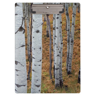 USA, Utah, Uinta-Wasatch-Cache National Forest 2 Clipboards