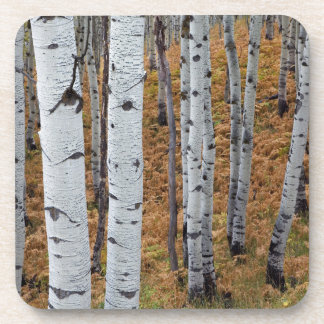 USA, Utah, Uinta-Wasatch-Cache National Forest 2 Coaster