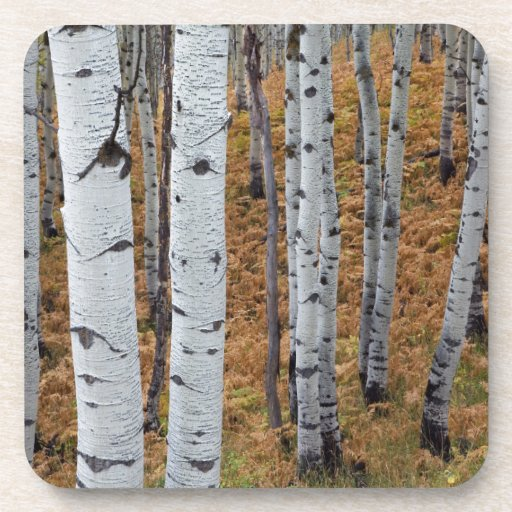 USA, Utah, Uinta-Wasatch-Cache National Forest 2 Beverage Coasters