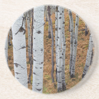 USA, Utah, Uinta-Wasatch-Cache National Forest 2 Drink Coaster