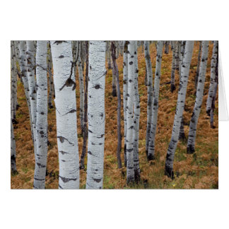 USA, Utah, Uinta-Wasatch-Cache National Forest 2 Greeting Card
