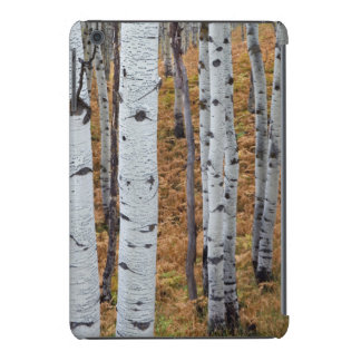 USA, Utah, Uinta-Wasatch-Cache National Forest 2 iPad Mini Cases