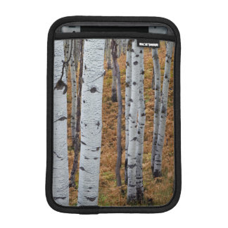 USA, Utah, Uinta-Wasatch-Cache National Forest 2 iPad Mini Sleeve