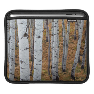 USA, Utah, Uinta-Wasatch-Cache National Forest 2 iPad Sleeve
