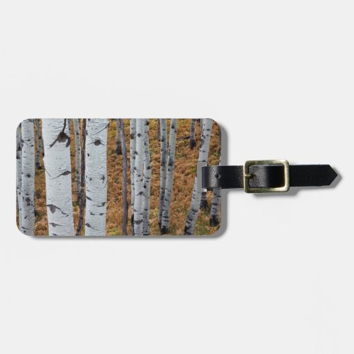 USA, Utah, Uinta-Wasatch-Cache National Forest 2 Travel Bag Tags