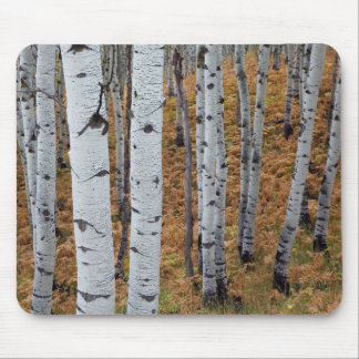 USA, Utah, Uinta-Wasatch-Cache National Forest 2 Mouse Mat