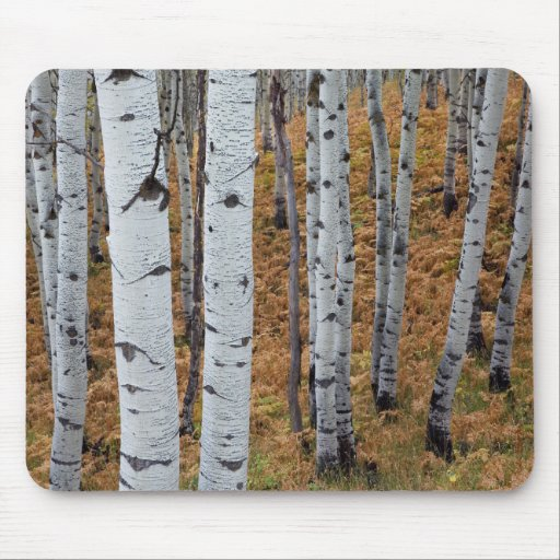 USA, Utah, Uinta-Wasatch-Cache National Forest 2 Mouse Pads