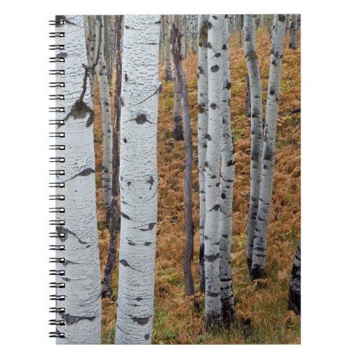 USA, Utah, Uinta-Wasatch-Cache National Forest 2 Spiral Notebook
