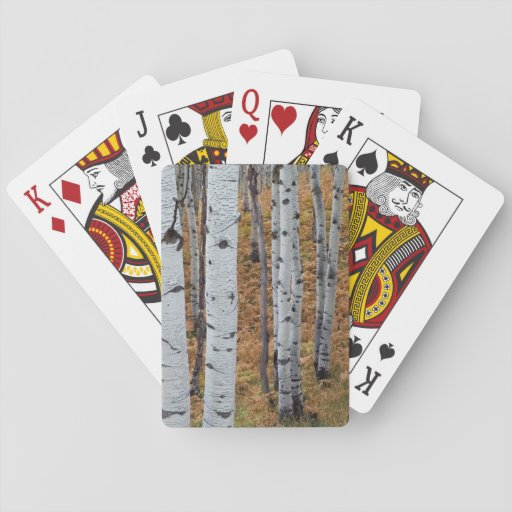 USA, Utah, Uinta-Wasatch-Cache National Forest 2 Playing Cards