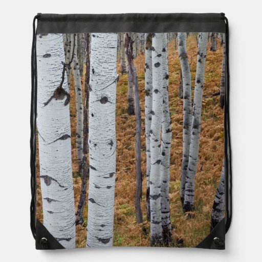 USA, Utah, Uinta-Wasatch-Cache National Forest 2 Backpacks