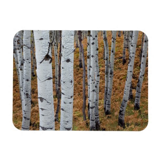 USA, Utah, Uinta-Wasatch-Cache National Forest 2 Magnet