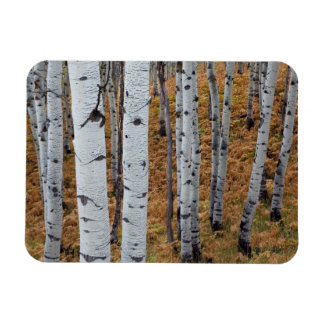 USA, Utah, Uinta-Wasatch-Cache National Forest 2 Rectangular Photo Magnet