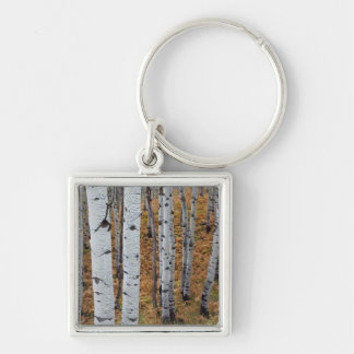 USA, Utah, Uinta-Wasatch-Cache National Forest 2 Silver-Colored Square Key Ring