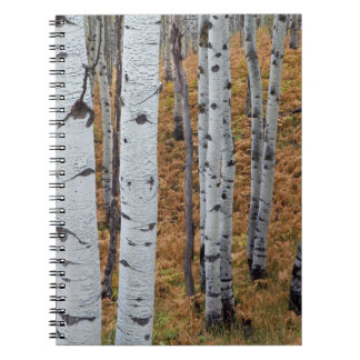 USA, Utah, Uinta-Wasatch-Cache National Forest 2 Spiral Notebook
