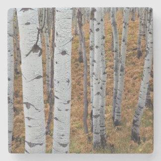 USA, Utah, Uinta-Wasatch-Cache National Forest 2 Stone Coaster