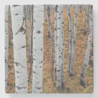 USA, Utah, Uinta-Wasatch-Cache National Forest 2 Stone Beverage Coaster