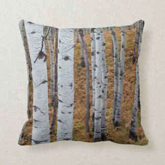 USA, Utah, Uinta-Wasatch-Cache National Forest 2 Throw Pillow