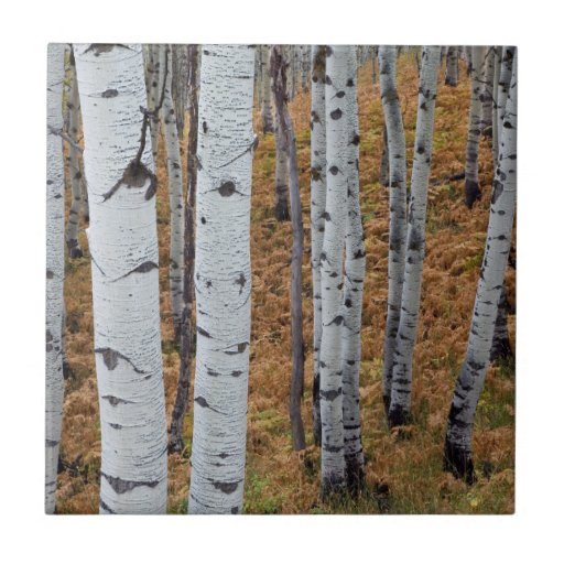 USA, Utah, Uinta-Wasatch-Cache National Forest 2 Tiles