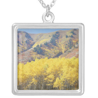 USA, Utah, Wasatch-Cache National Forest, Silver Plated Necklace