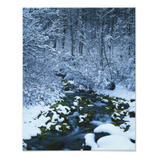 USA, Utah, Wasatch-Catch National Forest, Photo Print