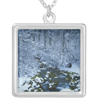 USA, Utah, Wasatch-Catch National Forest, Silver Plated Necklace