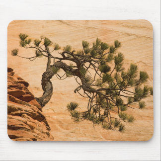 USA, Utah, Zion National Park. Pine tree Mouse Mat