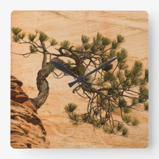 USA, Utah, Zion National Park. Pine tree Wall Clocks