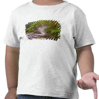USA, Vermont, East Arlington, Flowing streams Shirt