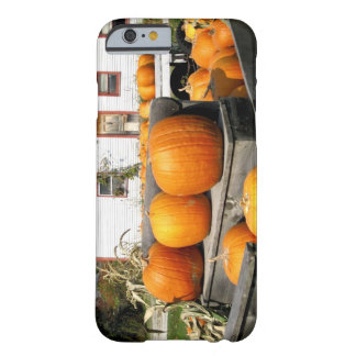 USA, Vermont. Pumpkins Barely There iPhone 6 Case
