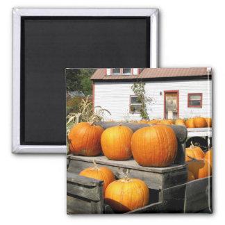 USA, Vermont. Pumpkins Magnet