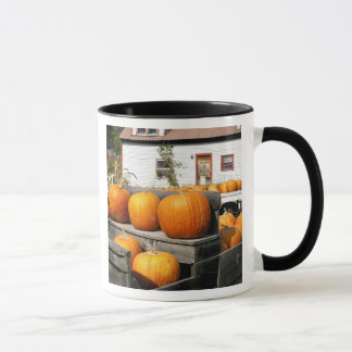 USA, Vermont. Pumpkins Mug